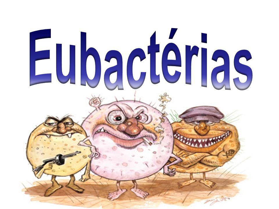 Eubactérias