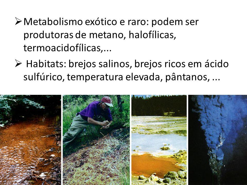Metabolismo exótico e raro: podem ser produtoras de metano, halofílicas, termoacidofílicas,...