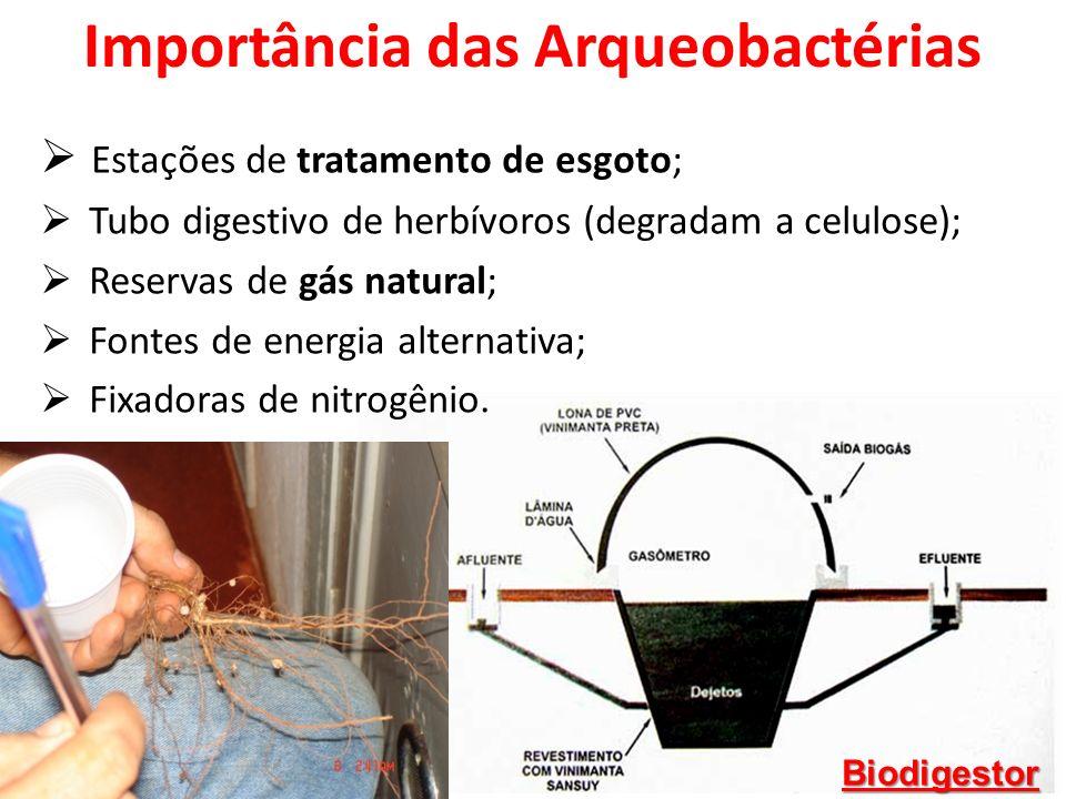 Importância das Arqueobactérias