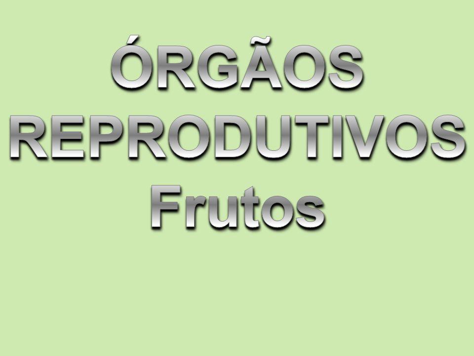 ÓRGÃOS REPRODUTIVOS Frutos