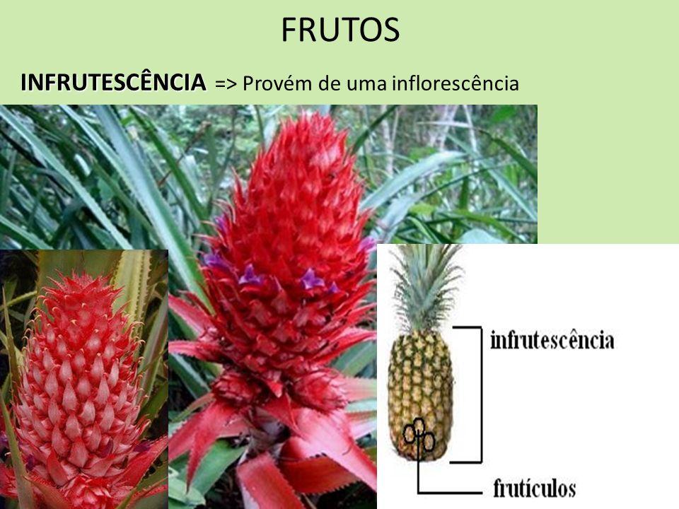 FRUTOS INFRUTESCÊNCIA => Provém de uma inflorescência