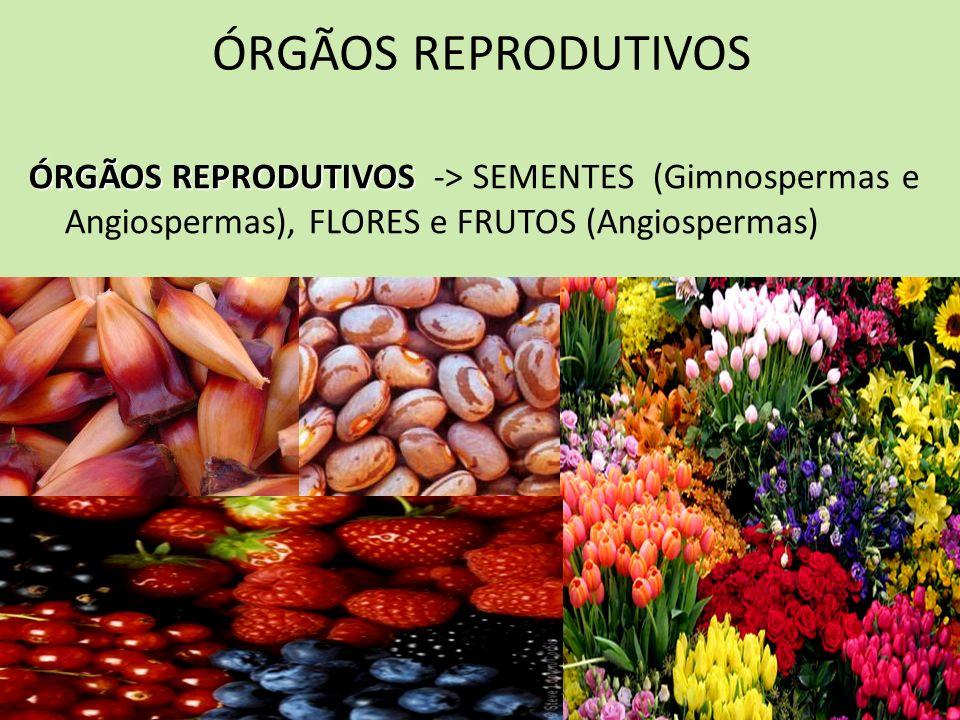 ÓRGÃOS REPRODUTIVOS ÓRGÃOS REPRODUTIVOS -> SEMENTES (Gimnospermas e Angiospermas), FLORES e FRUTOS (Angiospermas)