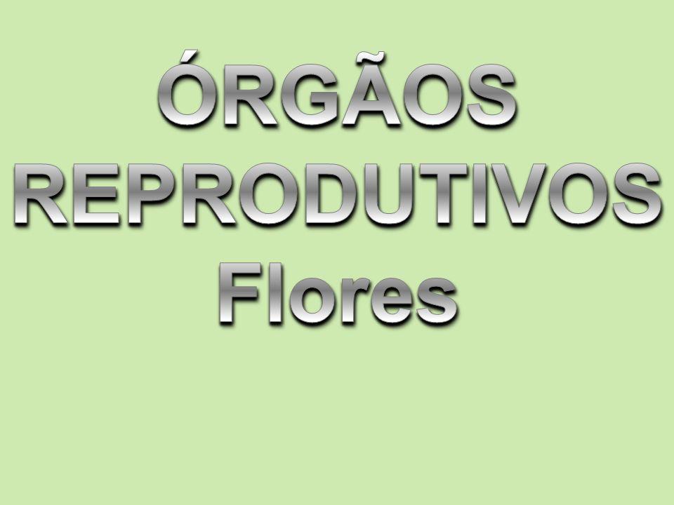 ÓRGÃOS REPRODUTIVOS Flores