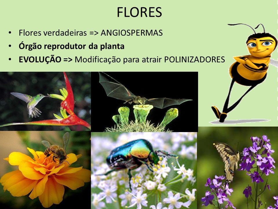 FLORES Flores verdadeiras => ANGIOSPERMAS