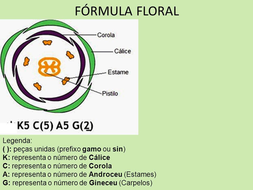 FÓRMULA FLORAL Legenda: ( ): peças unidas (prefixo gamo ou sin)