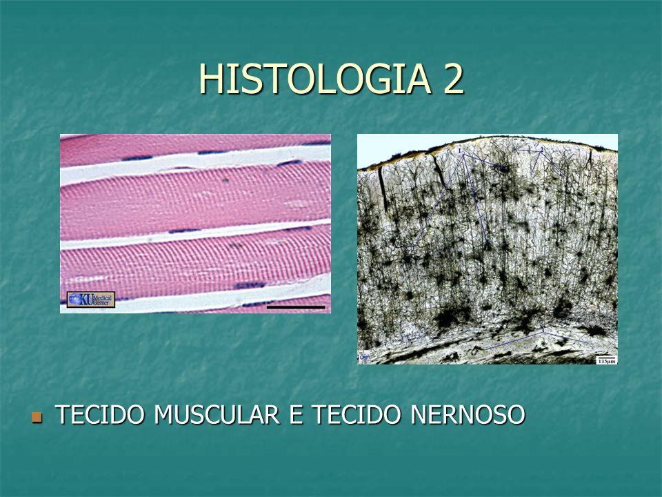 HISTOLOGIA 2 TECIDO MUSCULAR E TECIDO NERNOSO