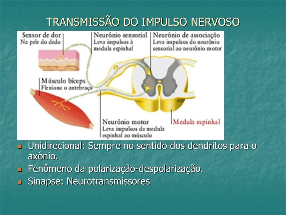 TRANSMISSÃO DO IMPULSO NERVOSO