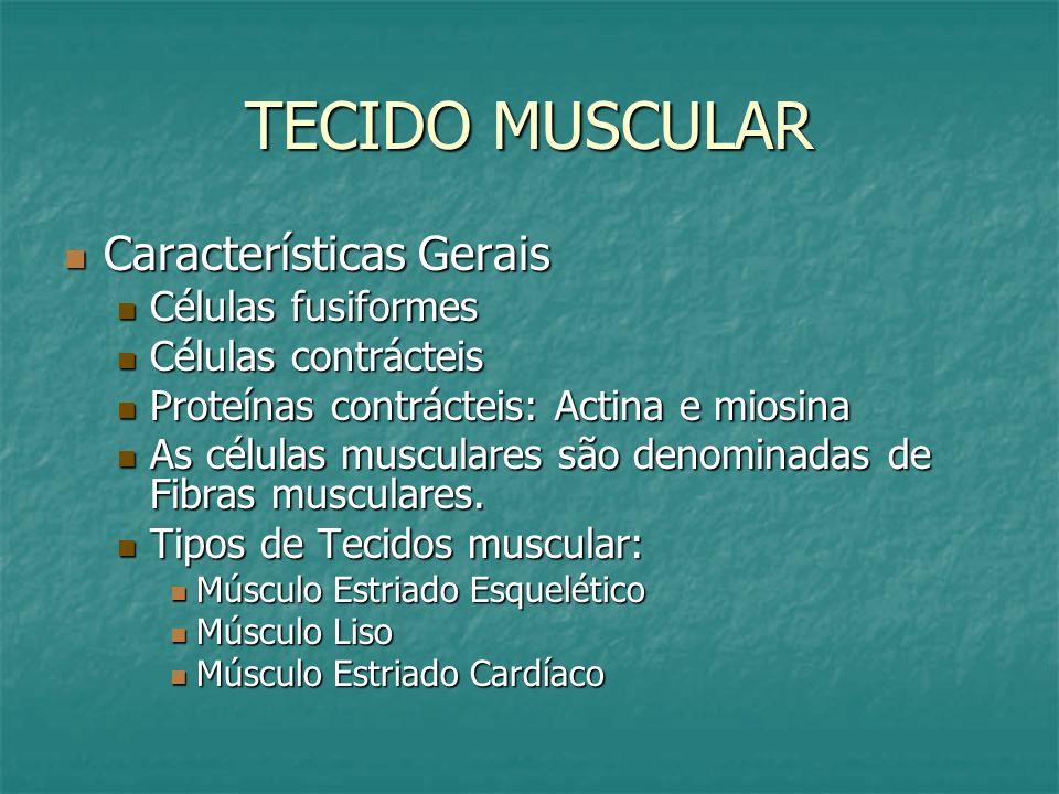 TECIDO MUSCULAR Características Gerais Células fusiformes