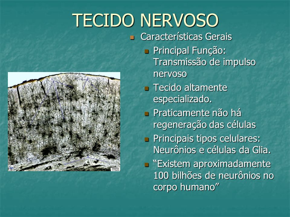 TECIDO NERVOSO Características Gerais