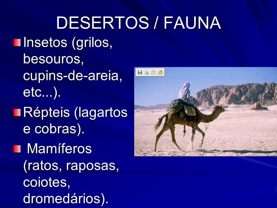 DESERTOS / FAUNA Insetos (grilos, besouros, cupins-de-areia, etc...).