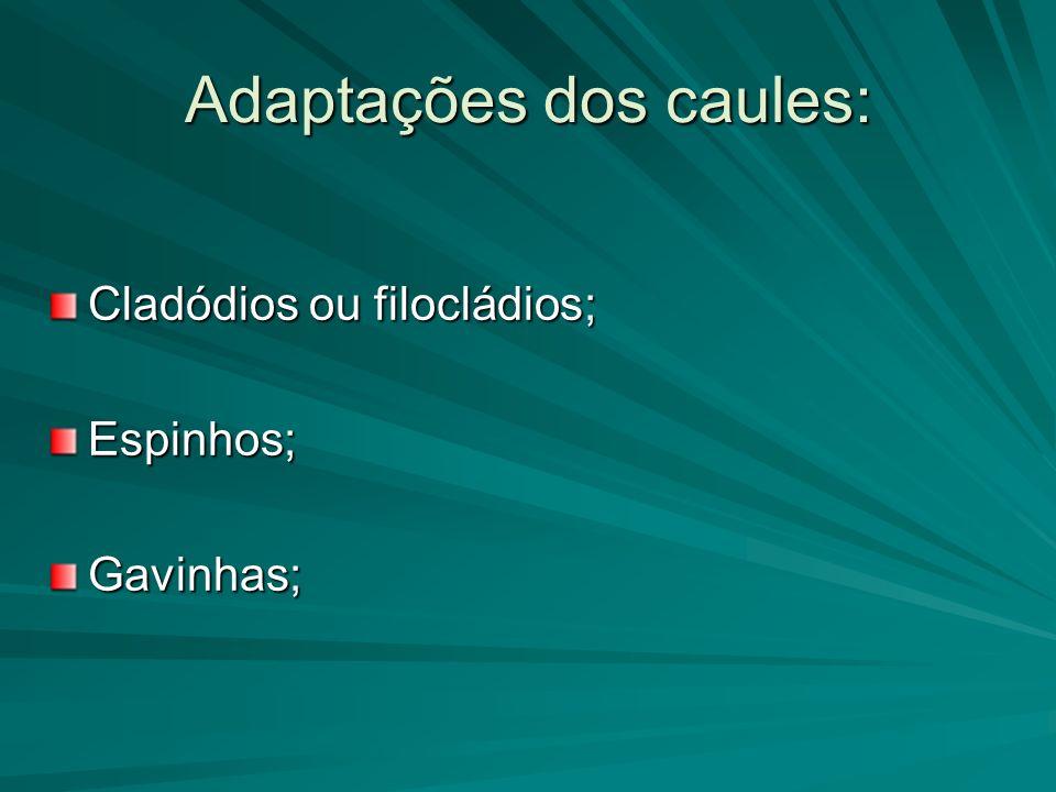 Adaptações dos caules: