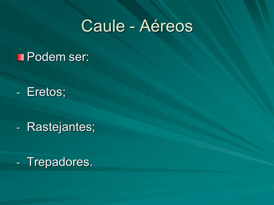 Caule - Aéreos Podem ser: Eretos; Rastejantes; Trepadores.
