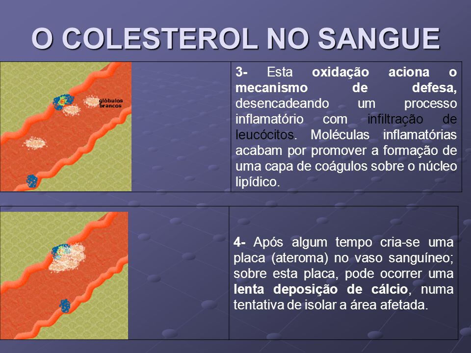O COLESTEROL NO SANGUE