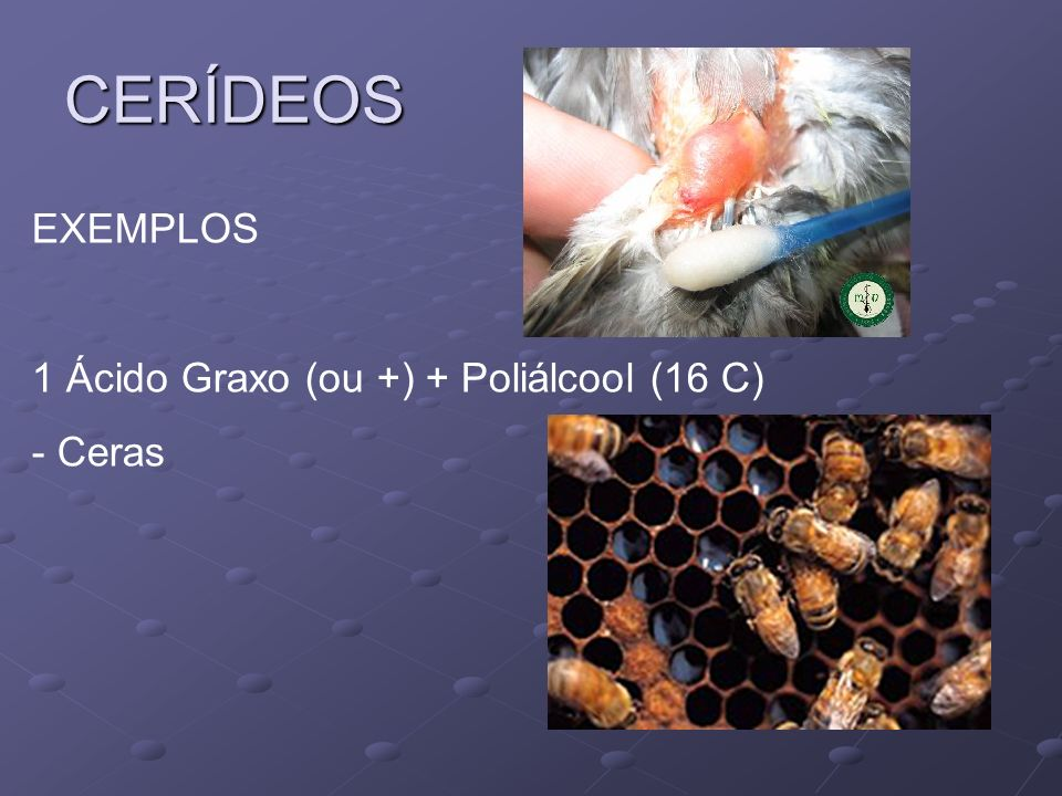 CERÍDEOS EXEMPLOS 1 Ácido Graxo (ou +) + Poliálcool (16 C) - Ceras