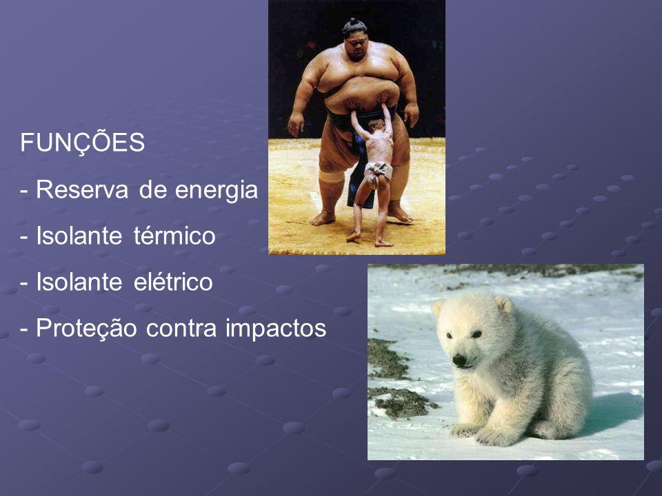 FUNÇÕES Reserva de energia Isolante térmico Isolante elétrico Proteção contra impactos