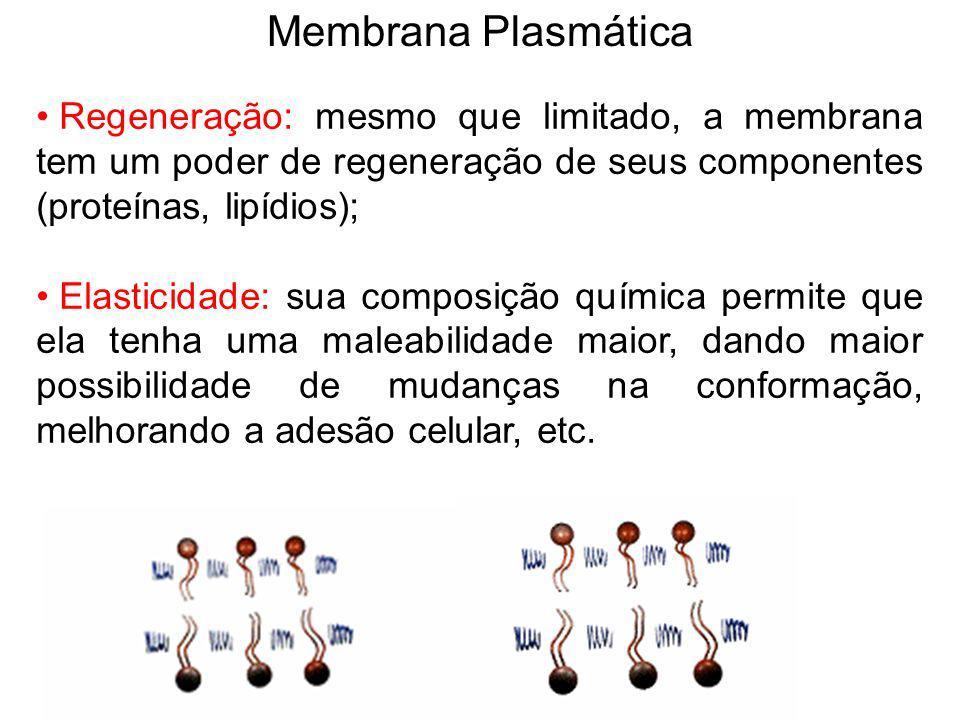 Membrana Plasmática Regeneração: mesmo que limitado, a membrana tem um poder de regeneração de seus componentes (proteínas, lipídios);