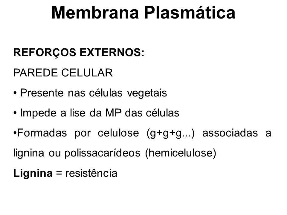 Membrana Plasmática REFORÇOS EXTERNOS: PAREDE CELULAR
