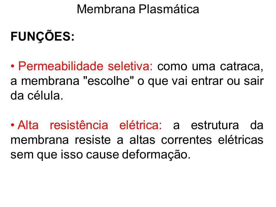 Membrana Plasmática FUNÇÕES: Permeabilidade seletiva: como uma catraca, a membrana escolhe o que vai entrar ou sair da célula.