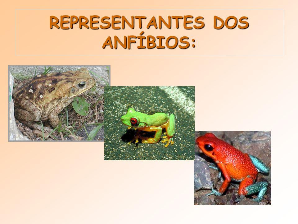REPRESENTANTES DOS ANFÍBIOS: