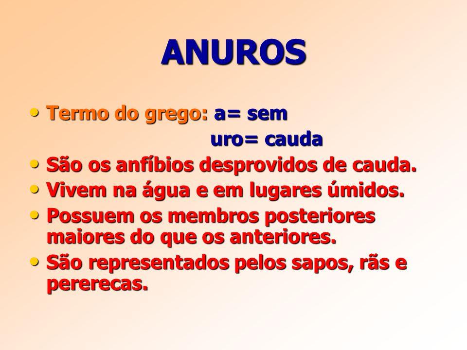 ANUROS Termo do grego: a= sem uro= cauda