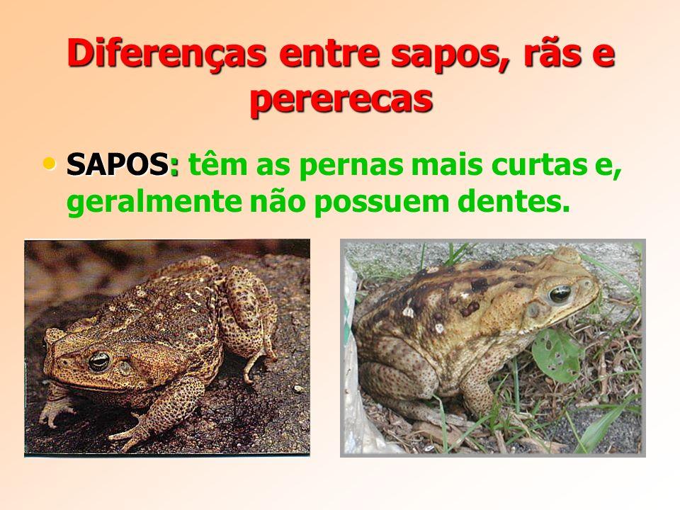 Diferenças entre sapos, rãs e pererecas