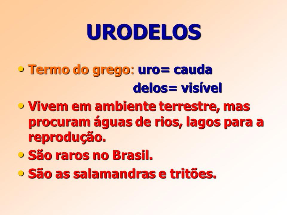 URODELOS Termo do grego: uro= cauda delos= visível