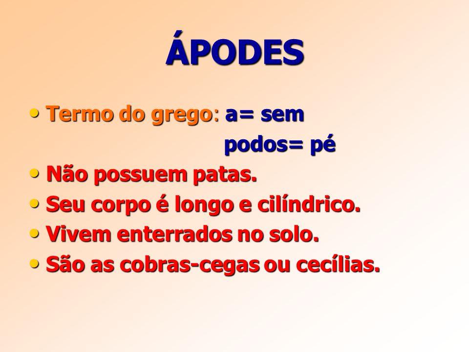 ÁPODES Termo do grego: a= sem podos= pé Não possuem patas.