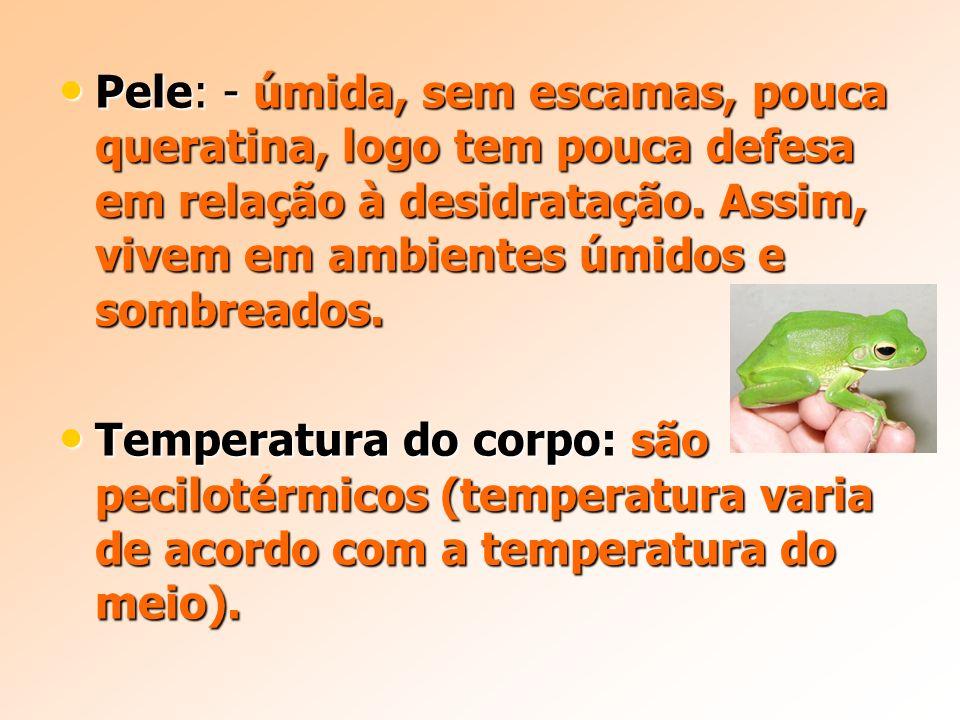 Pele: - úmida, sem escamas, pouca queratina, logo tem pouca defesa em relação à desidratação. Assim, vivem em ambientes úmidos e sombreados.