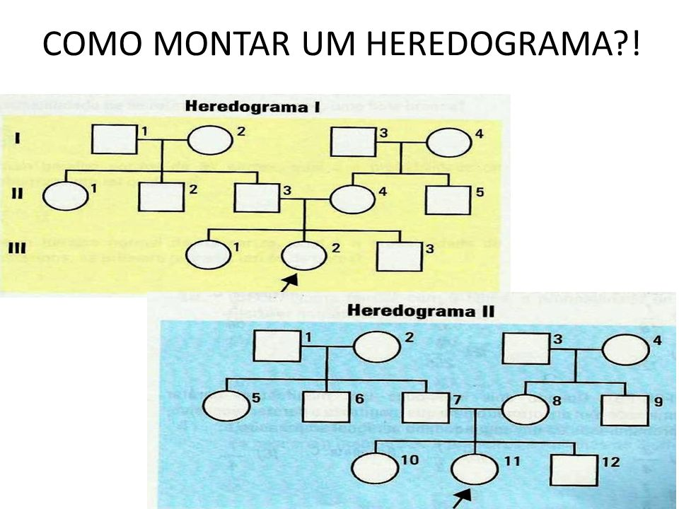 COMO MONTAR UM HEREDOGRAMA !