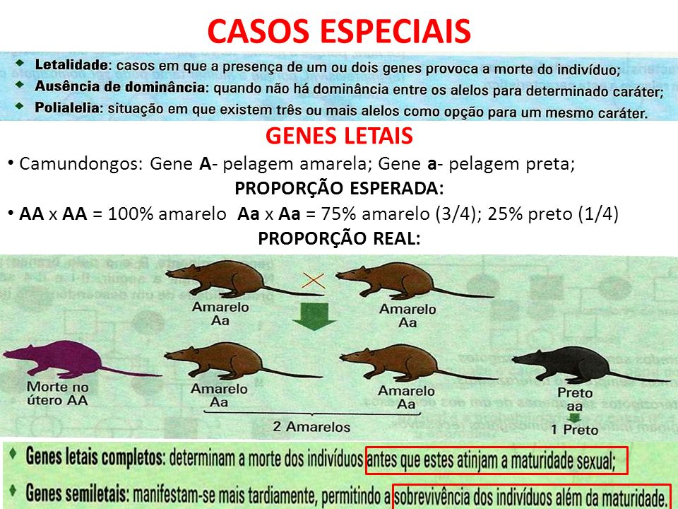 CASOS ESPECIAIS GENES LETAIS