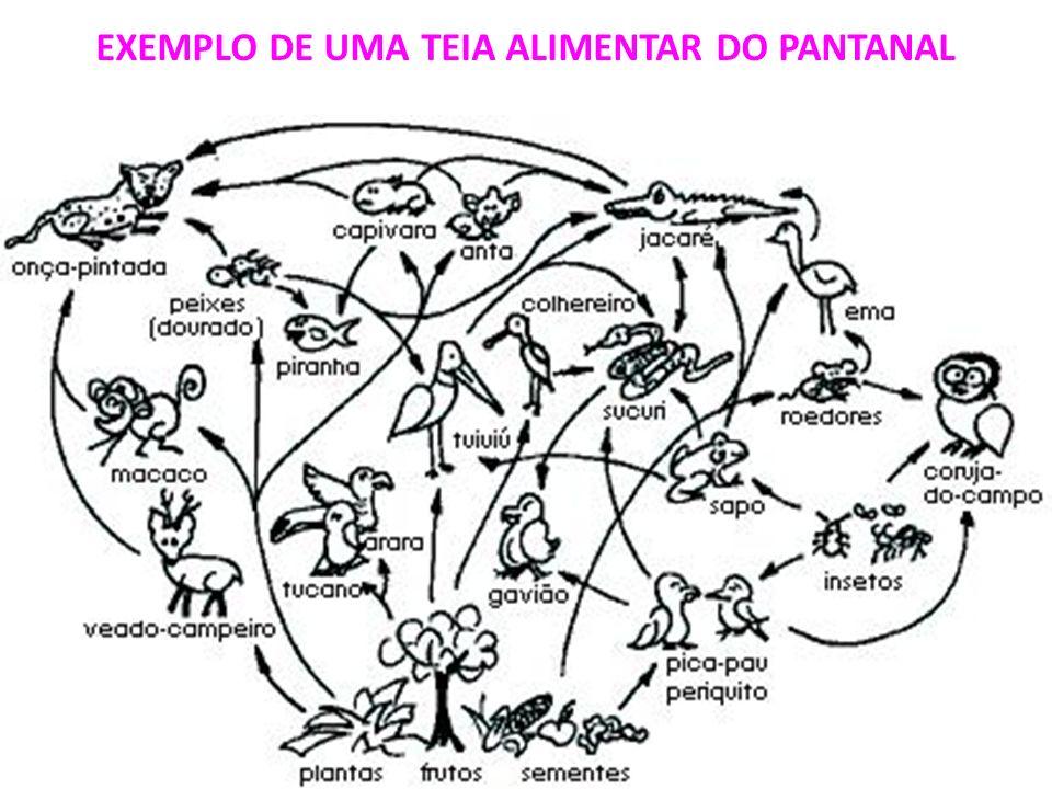 EXEMPLO DE UMA TEIA ALIMENTAR DO PANTANAL
