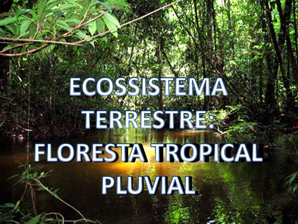 ECOSSISTEMA TERRESTRE: FLORESTA TROPICAL PLUVIAL
