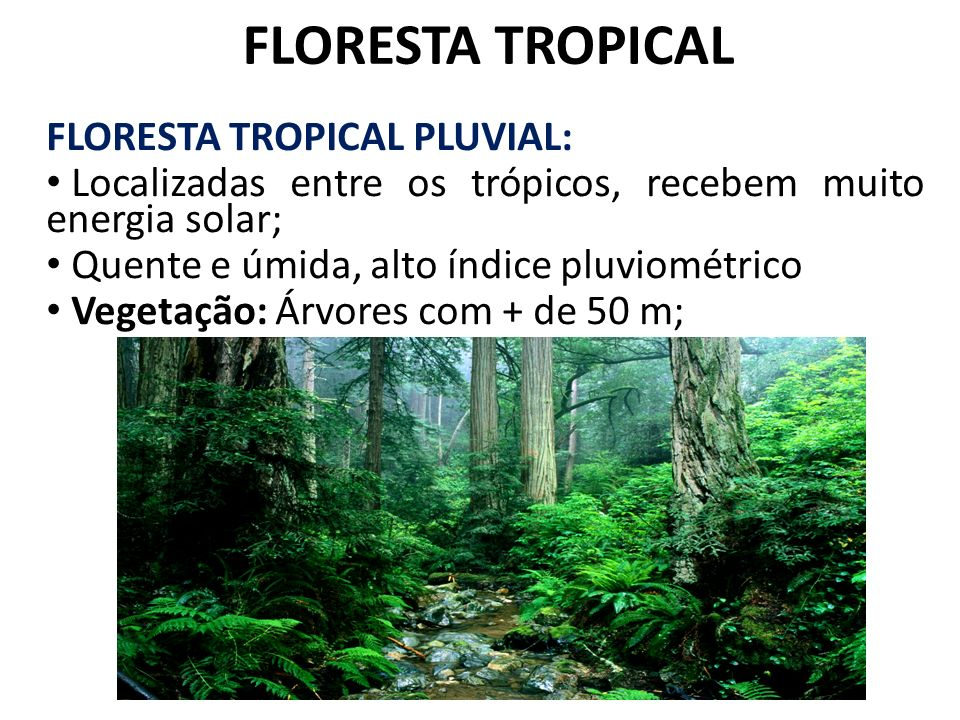 FLORESTA TROPICAL FLORESTA TROPICAL PLUVIAL: