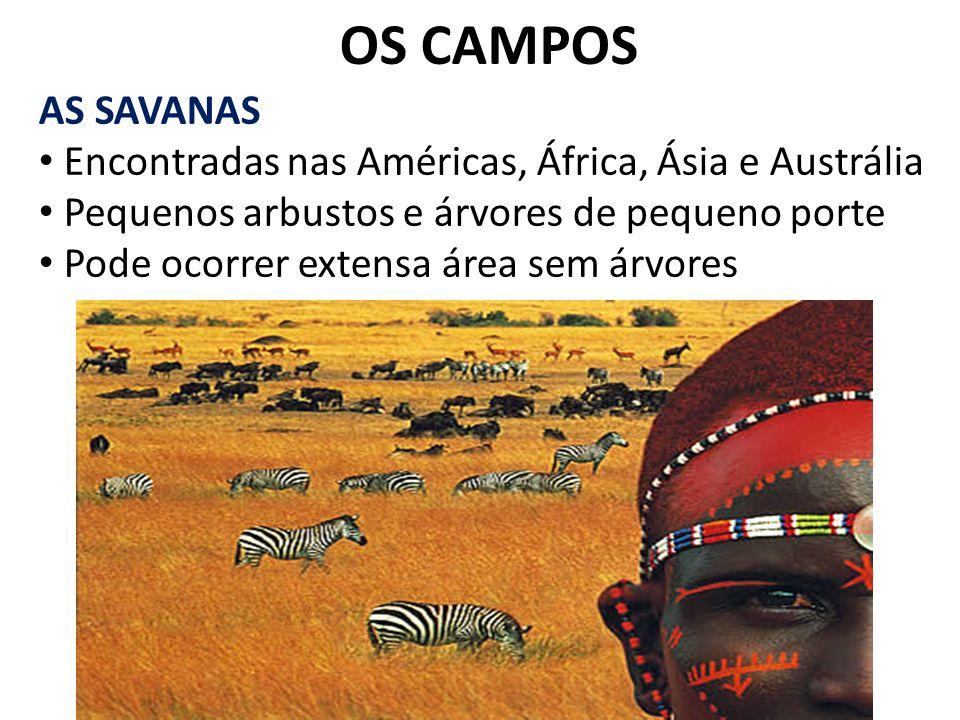 OS CAMPOS AS SAVANAS. Encontradas nas Américas, África, Ásia e Austrália. Pequenos arbustos e árvores de pequeno porte.