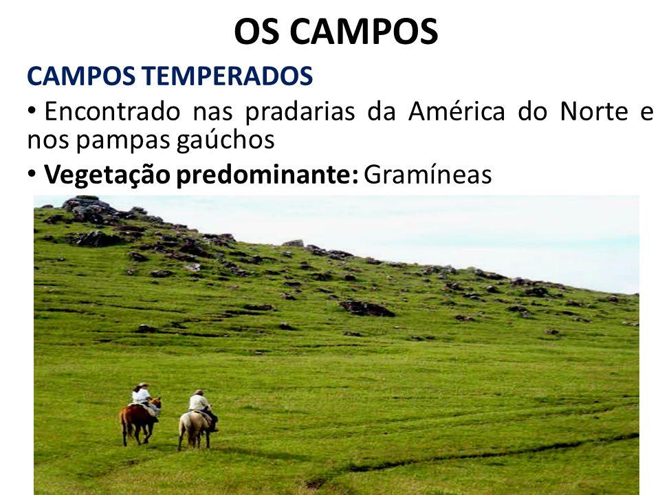 OS CAMPOS CAMPOS TEMPERADOS