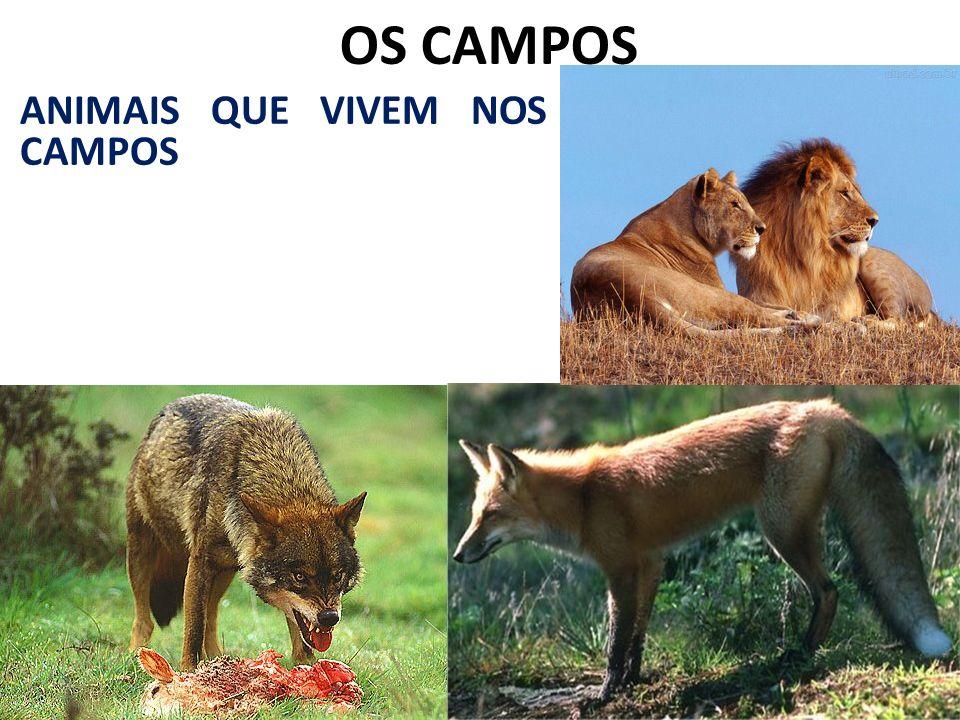 OS CAMPOS ANIMAIS QUE VIVEM NOS CAMPOS