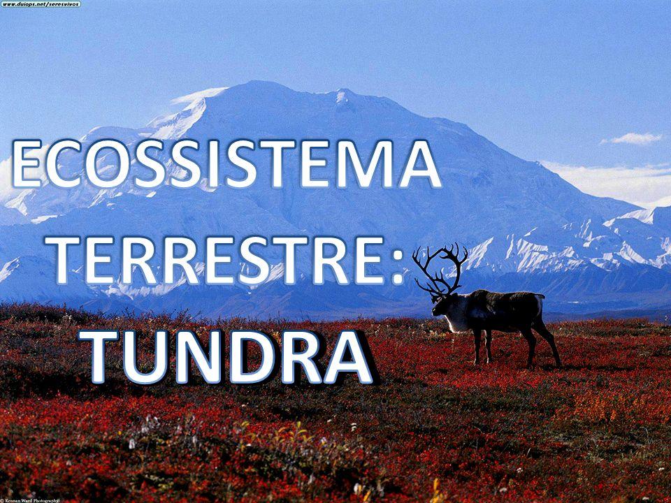 ECOSSISTEMA TERRESTRE:
