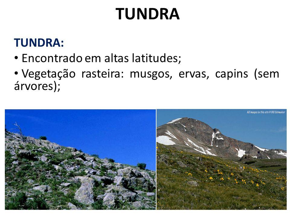 TUNDRA TUNDRA: Encontrado em altas latitudes;