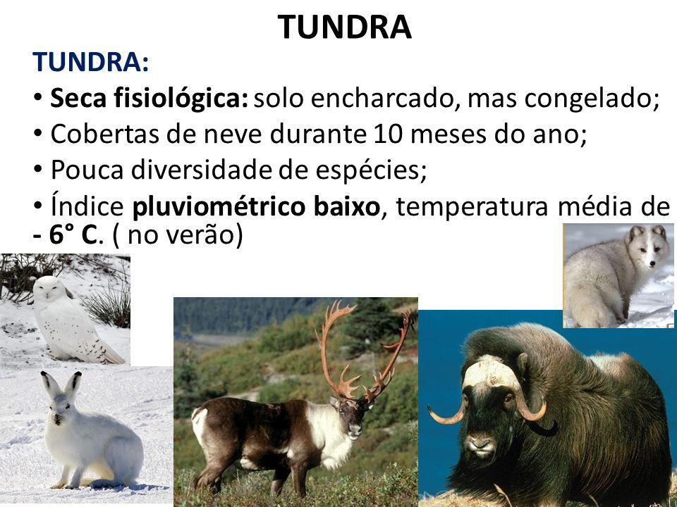 TUNDRA TUNDRA: Seca fisiológica: solo encharcado, mas congelado;