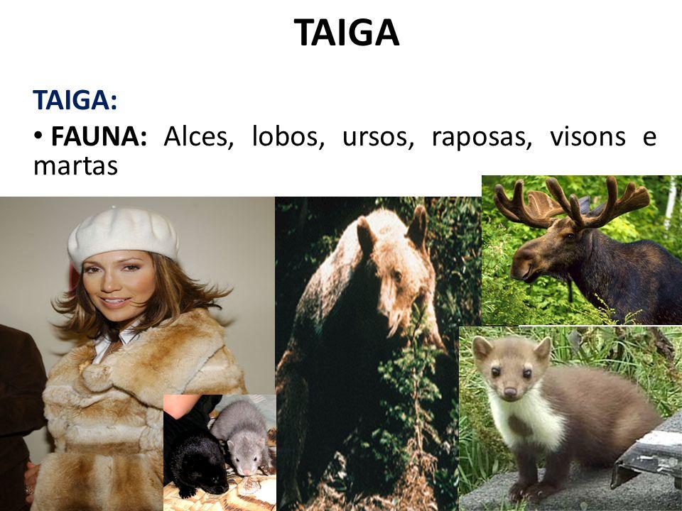 TAIGA TAIGA: FAUNA: Alces, lobos, ursos, raposas, visons e martas
