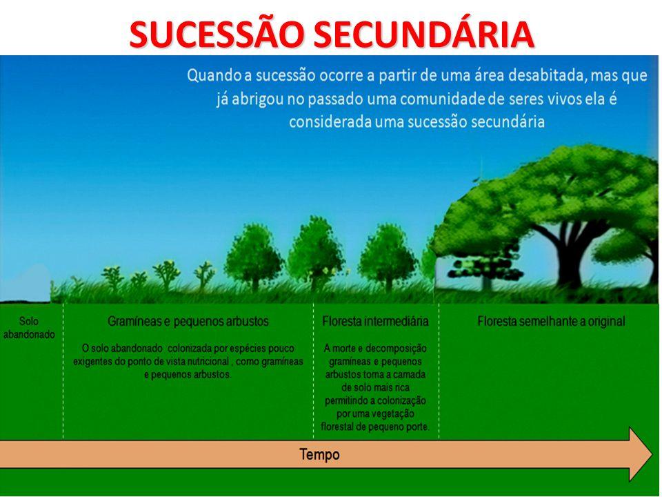 SUCESSÃO SECUNDÁRIA