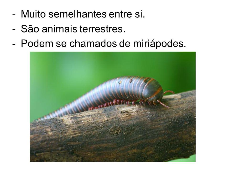 Muito semelhantes entre si. São animais terrestres.