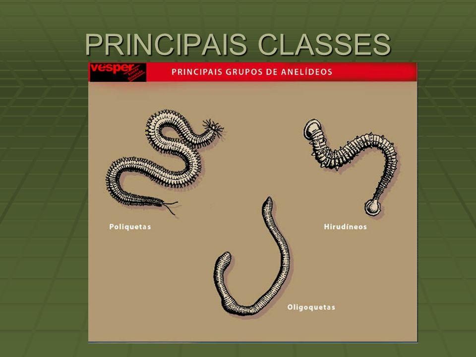 PRINCIPAIS CLASSES