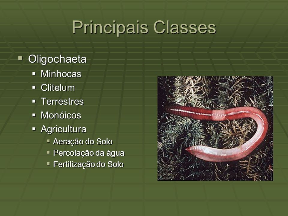 Principais Classes Oligochaeta Minhocas Clitelum Terrestres Monóicos