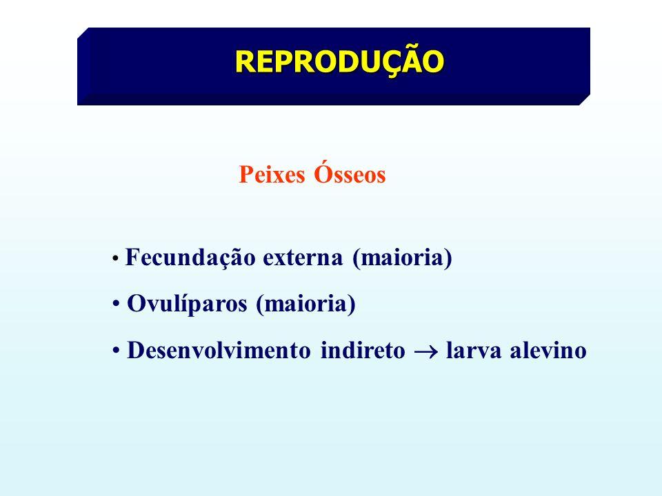 REPRODUÇÃO Ovulíparos (maioria)
