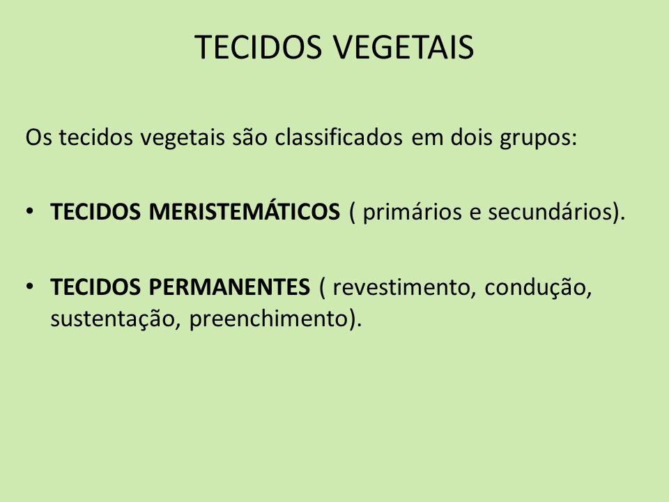 TECIDOS VEGETAIS Os tecidos vegetais são classificados em dois grupos: