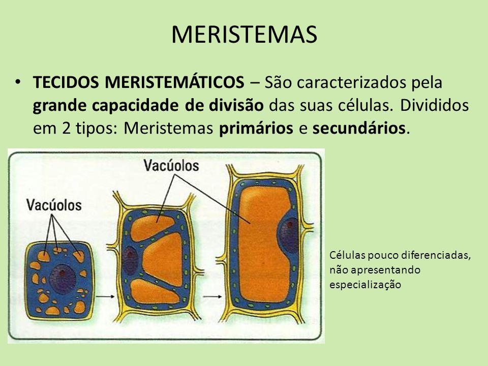 MERISTEMAS