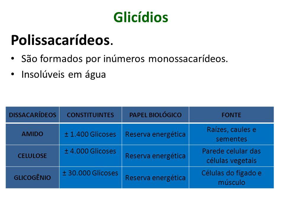 Glicídios Polissacarídeos. São formados por inúmeros monossacarídeos.