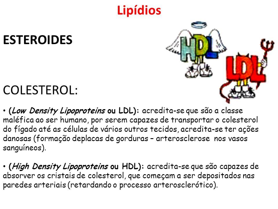 Lipídios ESTEROIDES COLESTEROL: