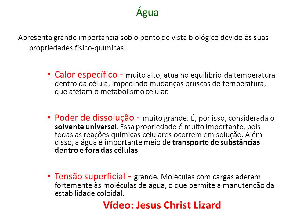 Vídeo: Jesus Christ Lizard